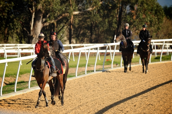 Las primeras impresiones de pezuñas sobre el Polytrack de Hawkesbury Race Club en Australia.