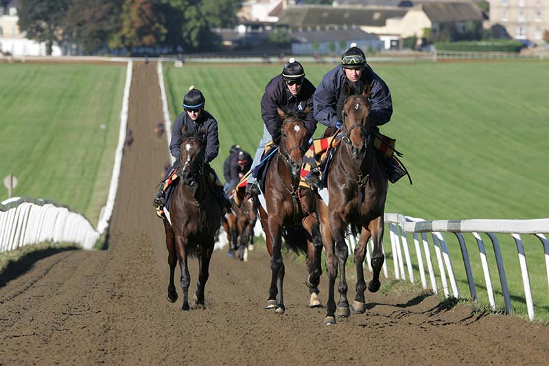 Warren Hill - The Busiest Racehorse Polytrack Gallops in Britain